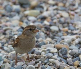 uccellino curioso
