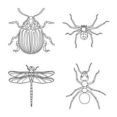 Vector illustration of insect and fly logo. Set of insect and element stock vector illustration.