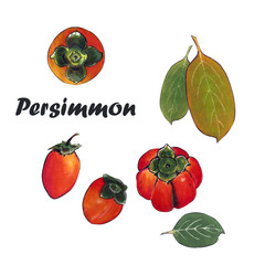 Illustration orange persimmon with leaves. Drawing markers