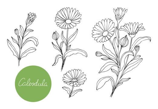 Set of medical plants. Hand drawn. Vector illustration