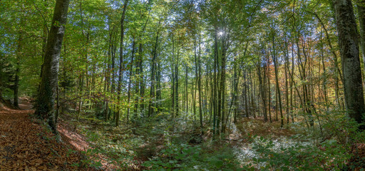 Autumn landscape at the arboretum of the Aubonne valley, Switzerland