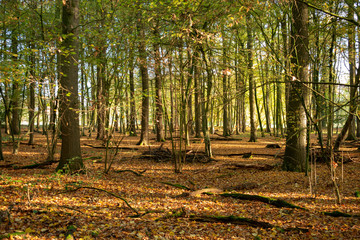 In the morning in the woods. Location: Germany, North Rhine-Westphalia, Hoxfeld.