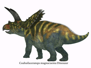 Coahuilaceratops Dinosaur Tail with Font