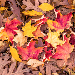 A display of some dry colorful leafs