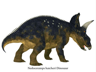 Nedoceratops Dinosaur Tail with Font