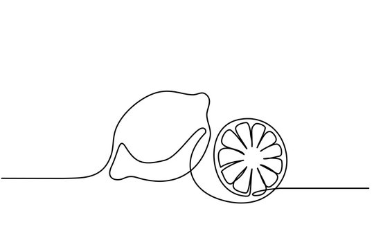 Continuous one line drawing. Lemon lime fruits. Vector illustration
