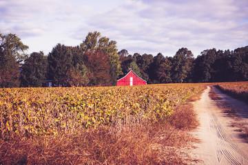 Beautiful Red Barn in a Golden Farm Field