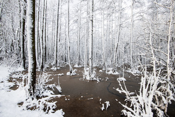 A frozen lake in the forest, birch trees close-up, Latvia