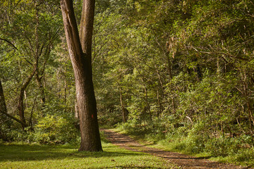 The Conestoga Trail, a dirt path, in Lancaster Central Park, Amish Country, Lancaster, Pennsylvania, USA