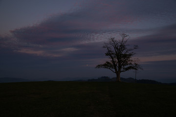 Sunset at Velka Lhota popular place with a great view of the surroundings dark and dark sky with alone tree
