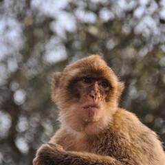 Expressão macaca