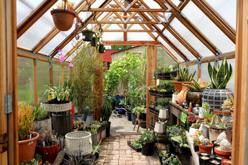 Fototapeta Greenhouse interior obraz