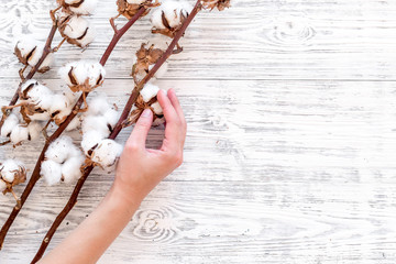 Cotton sorce. Collect cotton concept. Hand hold cotton flower. Cotton plant with white flowers, natural view on white wooden background top view copy space