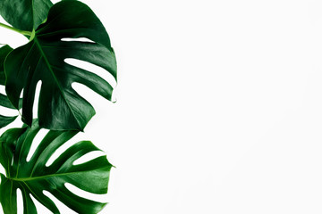 Tropical leaves Monstera white background copy space top view flat lay