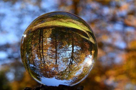 forêt de hêtres dans une boule de cristal