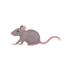 Grey mouse rodent animal vector Illustration on a white background