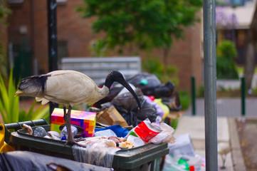 Müllvogel