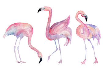 Watercolor flamingo. Painted image.