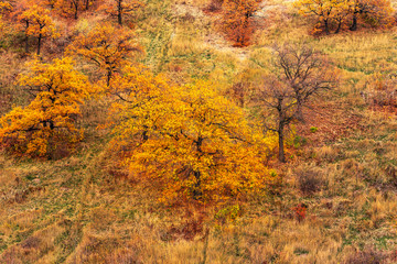 Oaks with autumn leaves on the mountainside - beautiful autumn landscape, background
