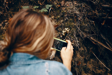 Rear view of female holding smart phone and taking picture of mushrooms growing in forest. Back portrait of unrecognizable woman in denim jacket snapping photo using mobile during trekking in woods
