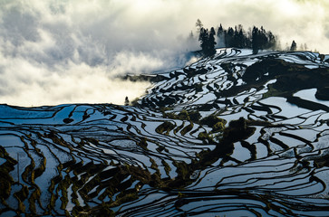 Yuanyang rice terrace at sunrise, Yunnan province, China