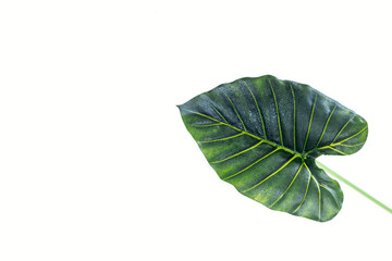 elevated view of beautiful green palm leaf isolated on white, minimalistic concept