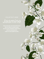 Template for greeting cards, wedding decorations, invitation, sales, packaging. Vector banner with Luxurious jasmine flowers. Spring or summer design. Space for text. Vintage style.