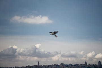 View of seagull flying with the Istanbul cityscape in the background.