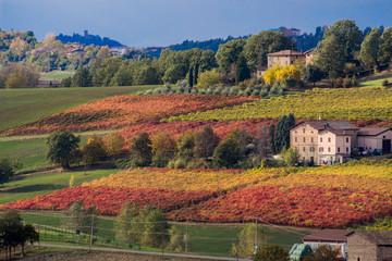 vineyards in aurtunno hills of lambrusca castelvetro di modena