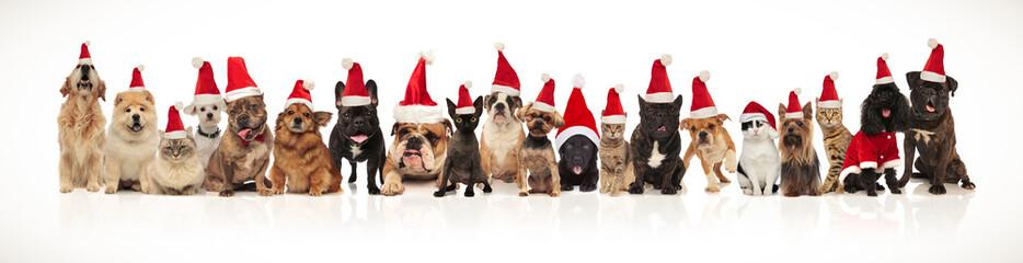 adorable group of many christmas pets wearing santa hats