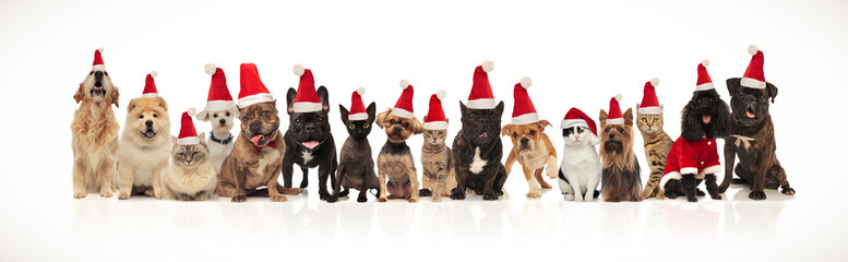many adorable pets of different breeds wearing santa hats