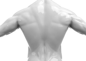 Shoulders - 3D