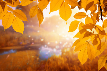Autumn background with orange vivid tree leaves
