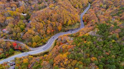 Autumn Winding Road