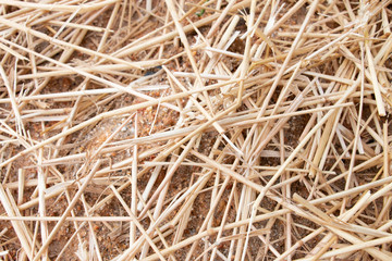 Straws of Hay Background