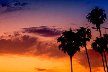 Palm Trees SIlhouetted Against a Tropical Sunset Background Image With Copy Space