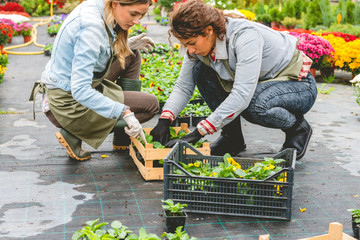 Planting flowers in greenhouse
