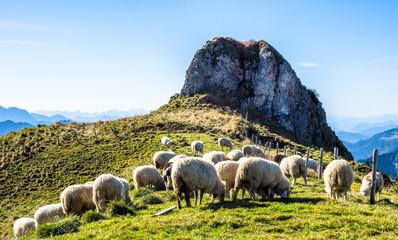 Wall Mural - sheep herd