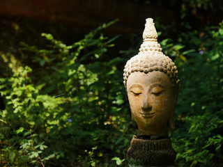 The buddha stone head in the forest