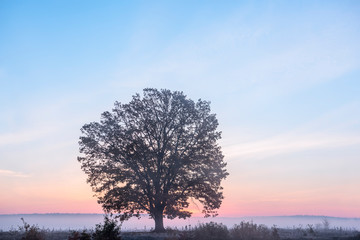 Lonely tree in a foggy field at sunrise. The first autumn frosts.
