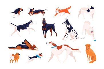 Collection of adorable dogs of different breeds playing, running, walking, sitting, pooping. Bundle of amusing cartoon domestic animals or pets isolated on white background. Flat vector illustration.