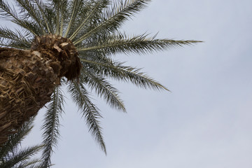 Palm tree on the sky background, copy space