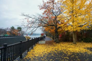 Autumn colorful trees near lake Kawaguchiko