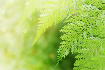 Tropical Fern Leaves on Natural Green Background with Copy Space