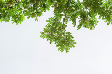 Green leaf on white sky background