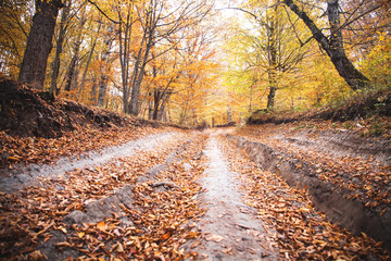 Road in the forest. Autumn landscape