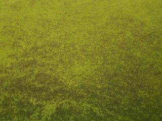 green algae plants covering stagnant water in a lake