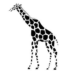 Vector illustration of giraffe, side view