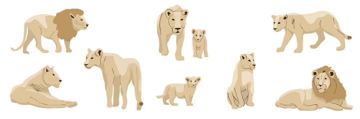 Set of realistic lions, lionesses and their cubs. Animals of Africa. Big cats. Vector object isolated on white background.