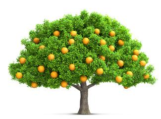 orange tree isolated 3D illustration